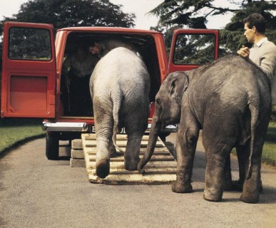 Ford Transit Regents Park Zoo Elephants 387x320