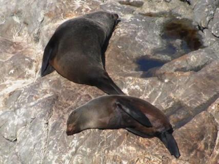 Seals2 427x320