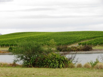 VFTC Yealands Vineyard 2 427x320