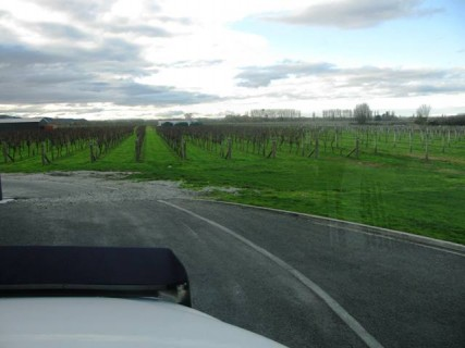 vic H Hawkes Bay Vineyard 1 427x320